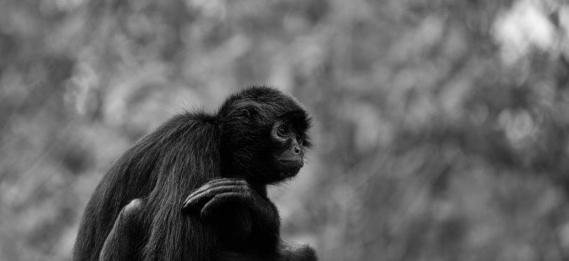 Photography: Animals